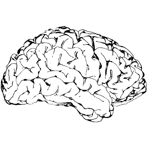 Multimodal Corpus Callosum Classification with Derived Features